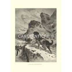 Veduta antica Svizzera: Cani del San Bernardo