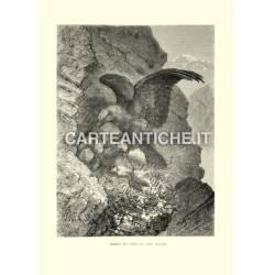 Aquila nel nido coi suoi pulcini
