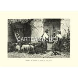 Mandria di pecore di ritorno all'ovile