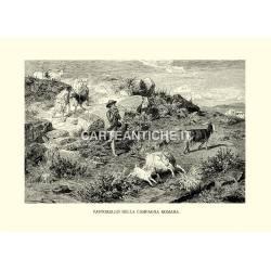 Pastorello nella campagna romana