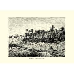Elche e la sua foresta di palme.