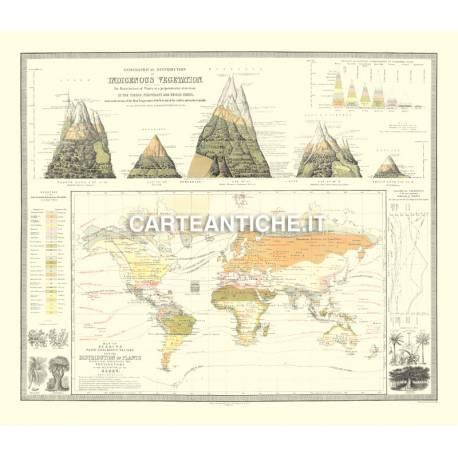 Carta antica: Vegetazione nel Mondo 03 - 1854